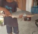 Anak Hiu Tersangkut Dijaring Nelayan, Kades Indra Himbau Warga Berhati-hati Bisa Saja Induknya Masih Berkeliaran Disungai Musi