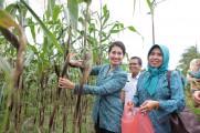 Produk Unggulan Dibidang Pertanian Kini Terus Dikembangkan