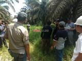 Diduga Tanam Sawit Di Kawasan Hutan Produksi, PT Panca Tirta Budi Agung Di Sambangi Tim KPH Lalan Mendis