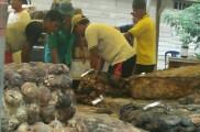 Suasana di pasar lelang UPPB Bayung Lencir.