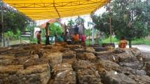 Kondisi Pasar Lelang UPPB Bayung Lencir(18/10/2017)