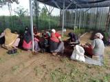Kelompok Wanita Tani (KWT) yang dibentuk dalam program restoran gambut