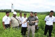 Peremajaan Sawit Rakyat di Muba Terluas Se-Indonesia
