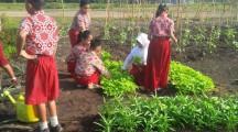 Kebun Sekolah Dilahan Gambut  Milik SDN Suka Makmur Kecamatan Lalan
