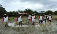 Penanaman Padi oleh kelompokKTSM Air Balui  Kecamatan Sanga Desa