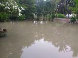 Kondisi Pekarangan Rumah Warga yang tergenang air menyulitkan warga menjemur padi hasil panen